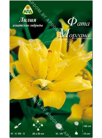Лилия Фата Моргана (Lilium asiatic Fata Morgana)