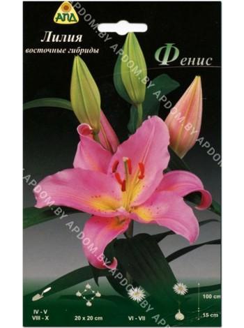 Лилия Фенис (Lilium oriental Fenice)