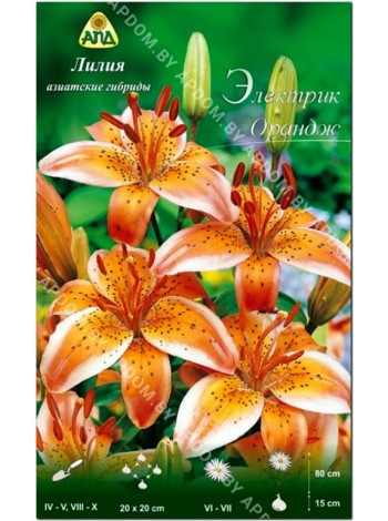 Лилия Электрик Орандж (Lilium asiatic Electric Orange)