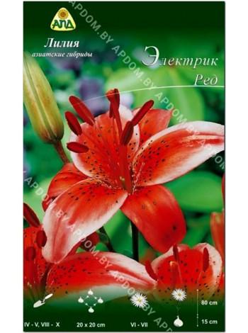 Лилия Электрик Ред (Lilium asiatic Electric Red)