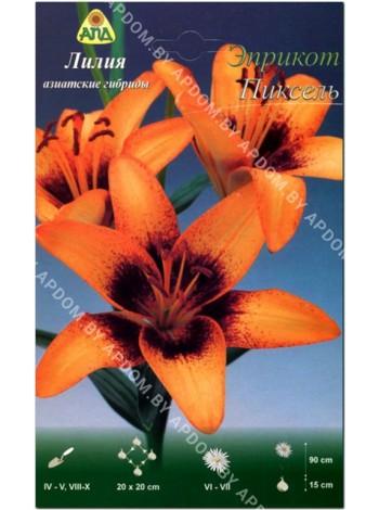 Лилия Эприкот Пиксель (Lilium asiatic Apricot Pixels)