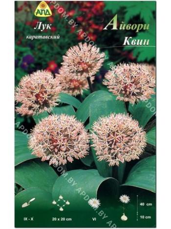 Лук каратавский Айвори Квин (Allium karataviense Ivory Queen)