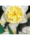Нарцисс Айс Кинг (Narcissus Ice King)
