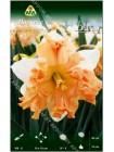 Нарцисс Вальц (Narcissus Walz)