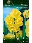 Нарцисс Йеллоу Черфулнесс (Narcissus Yellow Cheerfulness)