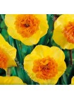 Нарцисс Модерн Арт (Narcissus Modern Art)
