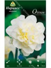 Нарцисс Обдам (Narcissus Obdam)
