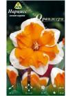 Нарцисс Оранжери (Narcissus Orangery)