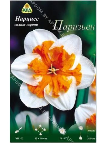 Нарцисс Паризьен (Narcissus Parisienne )