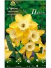 Нарцисс Пипит (Narcissus Pipit)