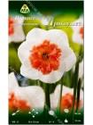Нарцисс Прикоушес (Narcissus Precocious)