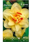 Нарцисс Таити (Narcissus Tahiti)