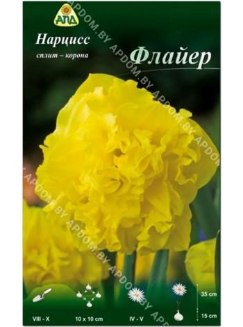 Нарцисс Флайер (Narcissus Flyer)