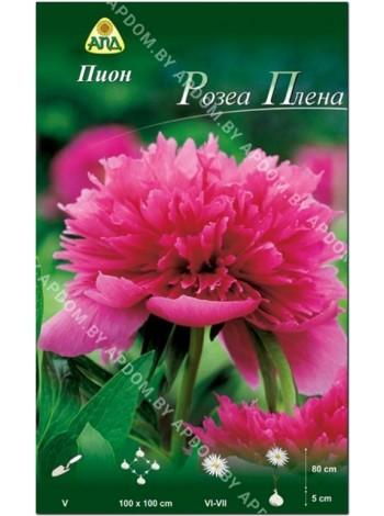 Пион Розеа Плена (Paeonia lactiflora Rosea Plena)