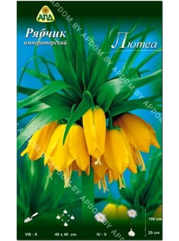 Рябчик императорский Лютеа (Fritillaria imperialis Lutea)