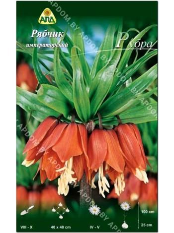 Рябчик императорский Рубра (Fritillaria imperialis Rubra)