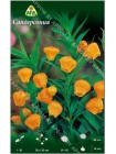 Сандерсония (Sandersonia aurantiaca)