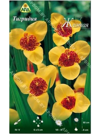 Тигридия желтая (Tigridia pavonia)