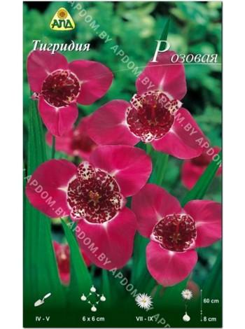 Тигридия розовая (Tigridia pavonia)