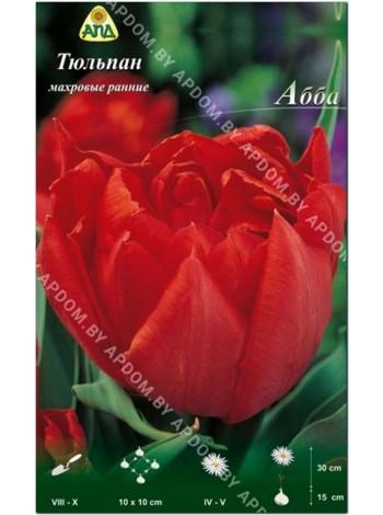 Тюльпан Абба (Tulipa Abba)