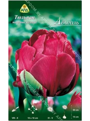 Тюльпан Абигаль (Tulipa Abigail)