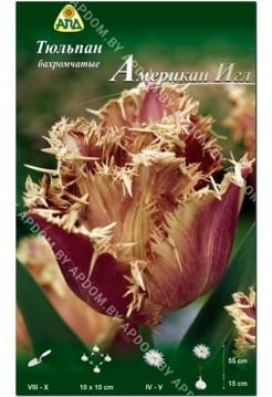 Тюльпан Американ Игл