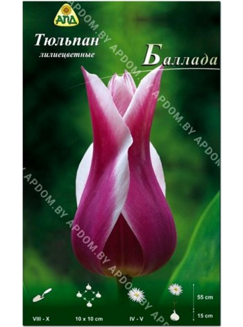 Тюльпан Баллада (Tulipa Ballade)