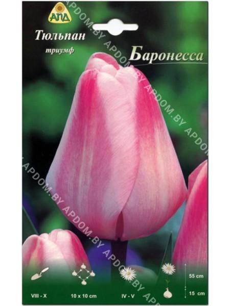 Тюльпан Баронесса