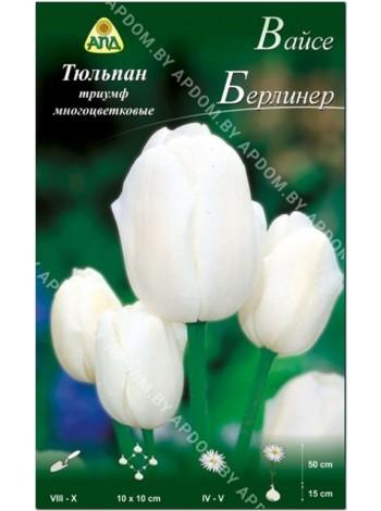 Тюльпан Вайсе Берлинер (Tulipa Weise Berliner)