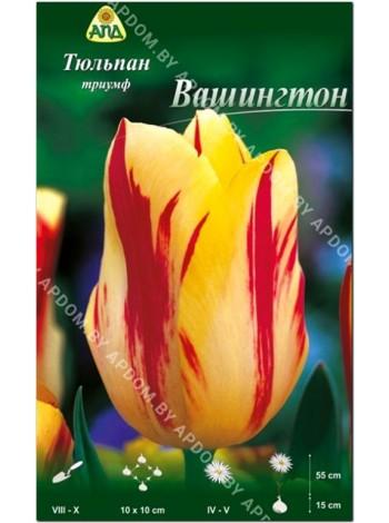 Тюльпан Вашингтон (Tulipa Washington)