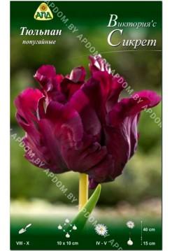 Тюльпан Виктория'с Сикрет