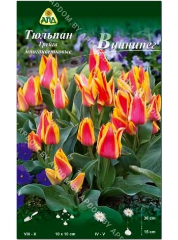 Тюльпан Виннипег (Tulipa Winnipeg)