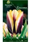 Тюльпан Гавота (Tulipa Gavota)