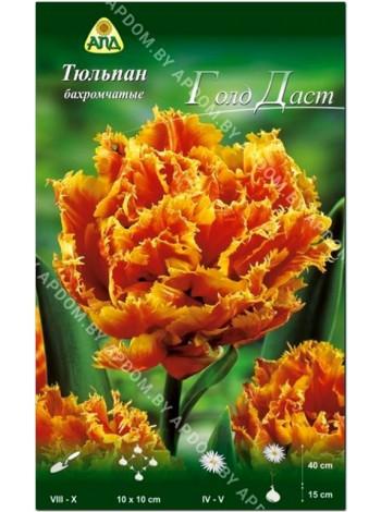 Тюльпан Голд Даст (Tulipa Gold Dust)