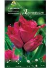 Тюльпан Джетфайер (Tulipa Jetfire)