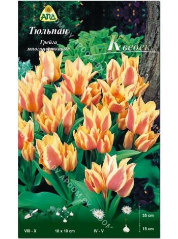 Тюльпан Квебек (Tulipa Quebec)