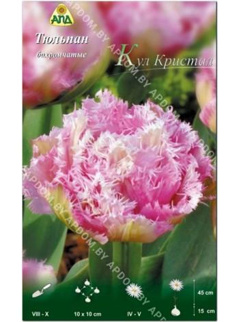 Тюльпан Кул Кристал (Tulipa Cool Crystal)