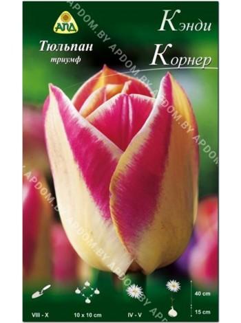 Тюльпан Кэнди Корнер (Tulipa Candy Corner)