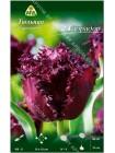 Тюльпан Лабрадор (Tulipa Labrador)