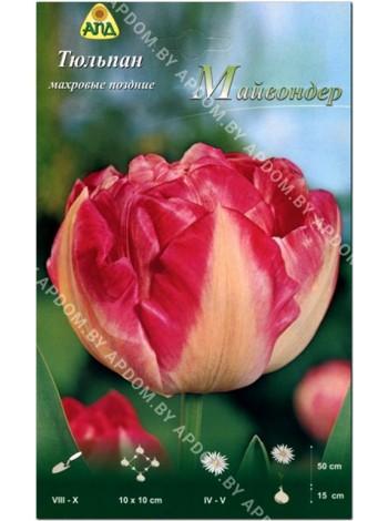 Тюльпан Майвондер (Tulipa Maywonder)