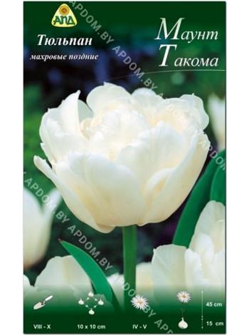 Тюльпан Маунт Такома (Tulipa Mount Tacoma)