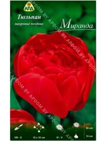Тюльпан Миранда