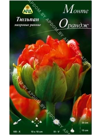 Тюльпан Монте Орандж (Tulipa Monte Orange)