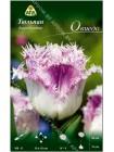 Тюльпан Овиедо (Tulipa Oviedo)