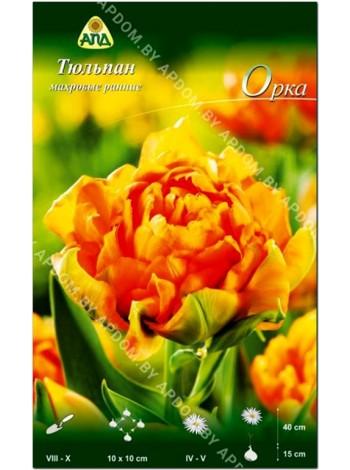 Тюльпан Орка (Tulipa Orca)