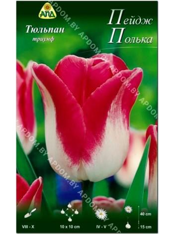 Тюльпан Пейдж Полька (Tulipa Page Polka)