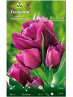 Тюльпан Пепл Букет (Tulipa Purple Bouquet)