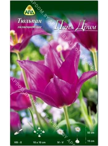 Тюльпан Пепл Дрим (Tulipa Purple Dream)