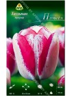 Тюльпан Плэйгёл (Tulipa Playgirl)
