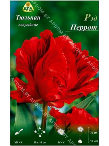 Тюльпан Ред Перрот (Tulipa Red Parrot)